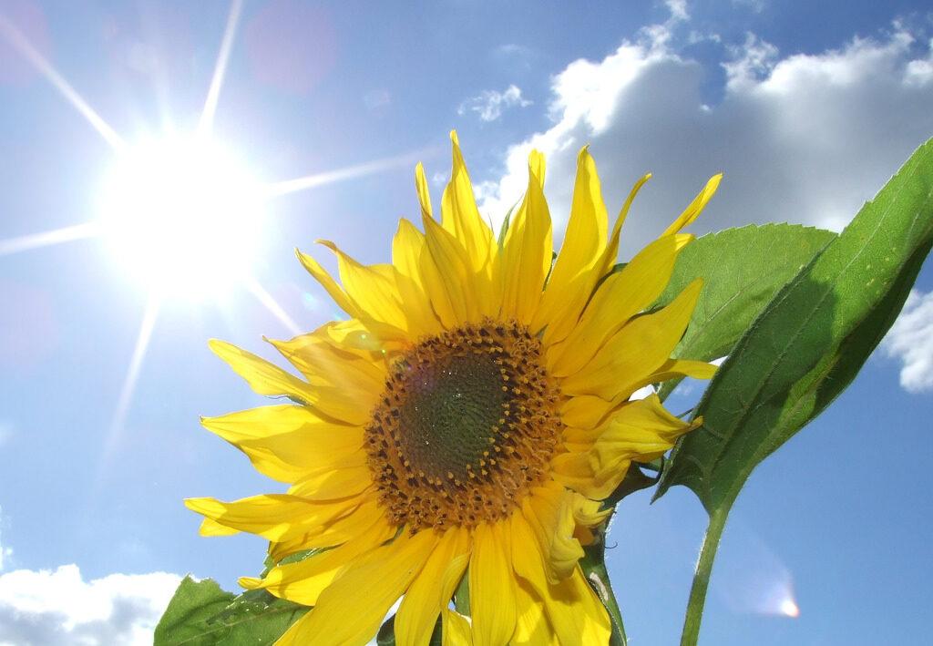 Sol em Libra com Ascendente em leão flor luz